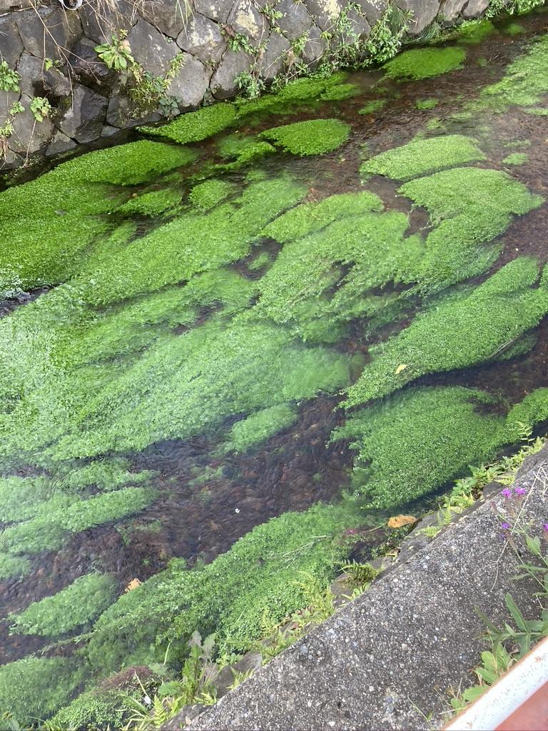 4. Unveiling evolutionary mechanisms of adaptive traits in aquatic plant leaf
